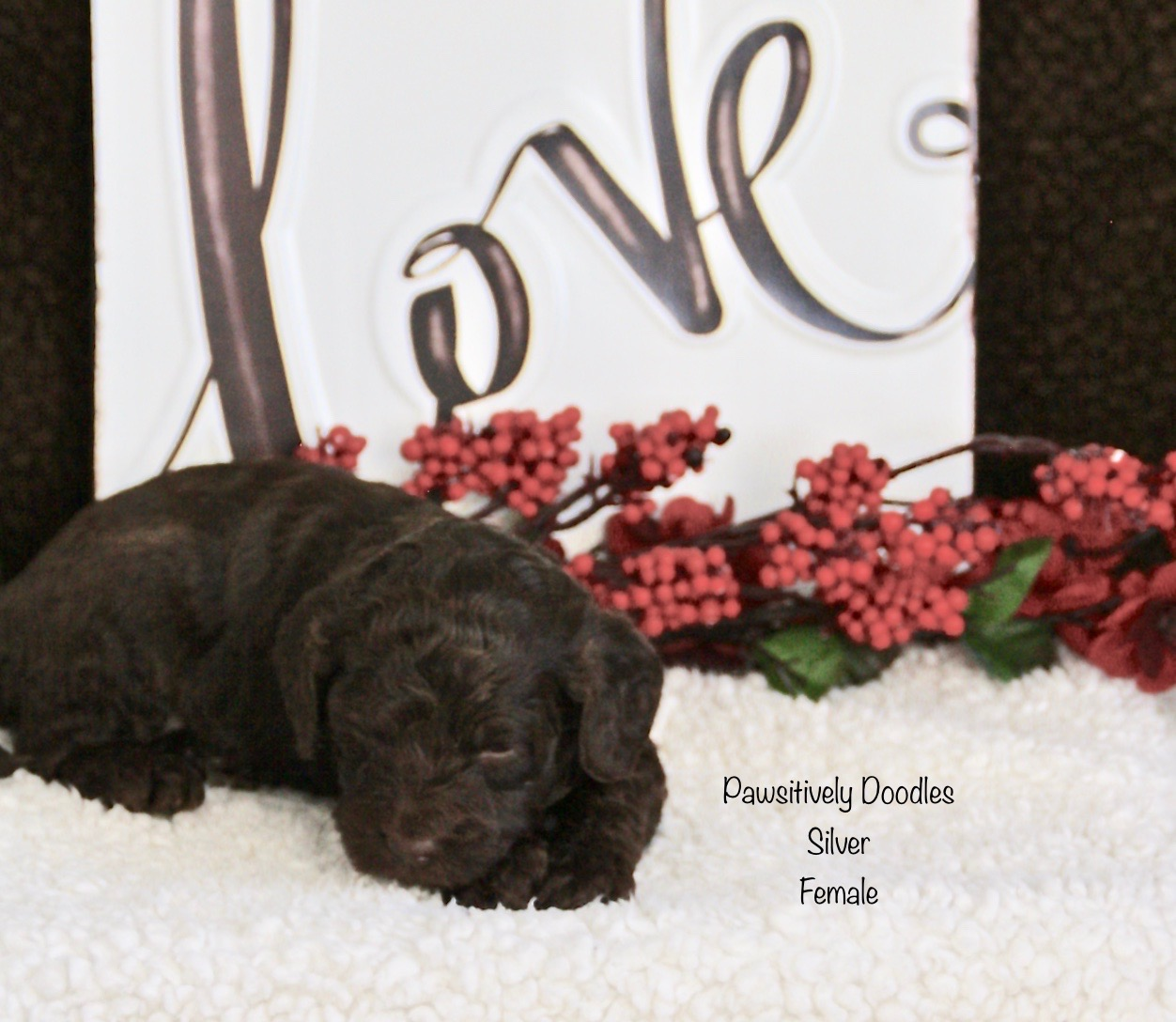 Indy's Puppies 3.5 Week Pictures ft Valentines